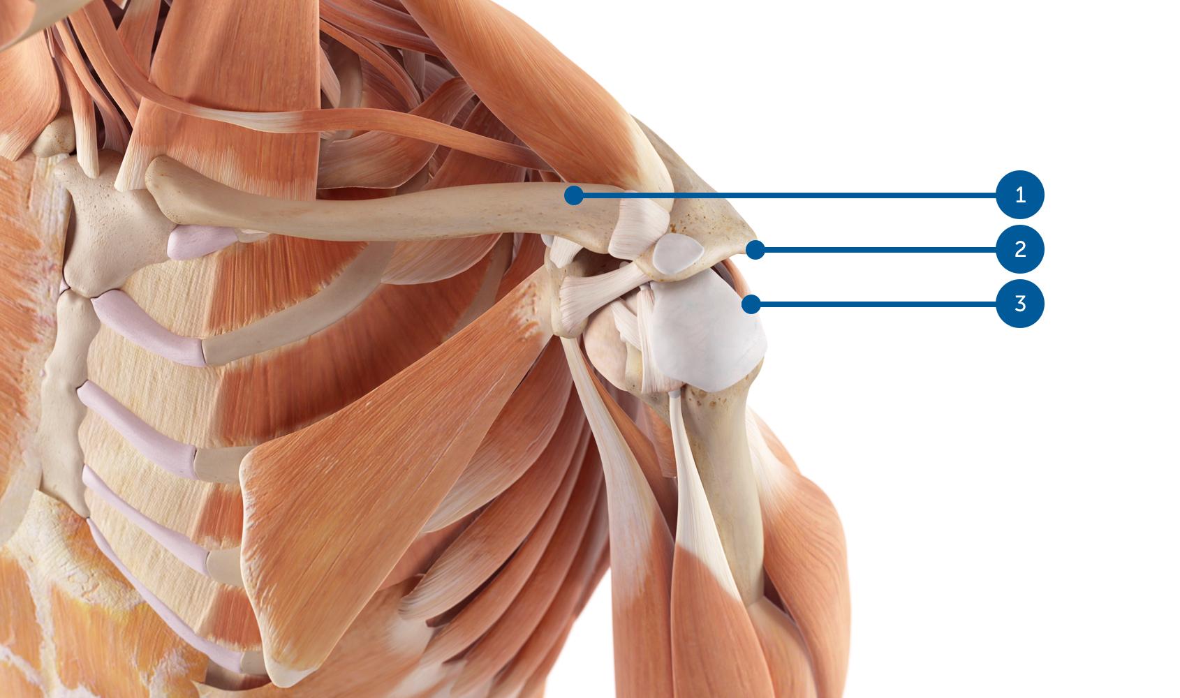 metode de tratament chirurgical al artrozei unguentul articulației piciorului doare
